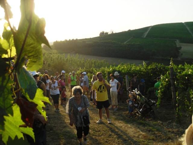 camminata tra vigne e boschi